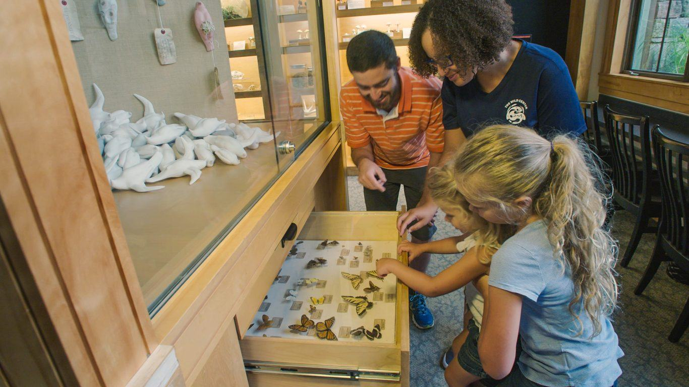 Family explores the Naturalist Cabinet drawers