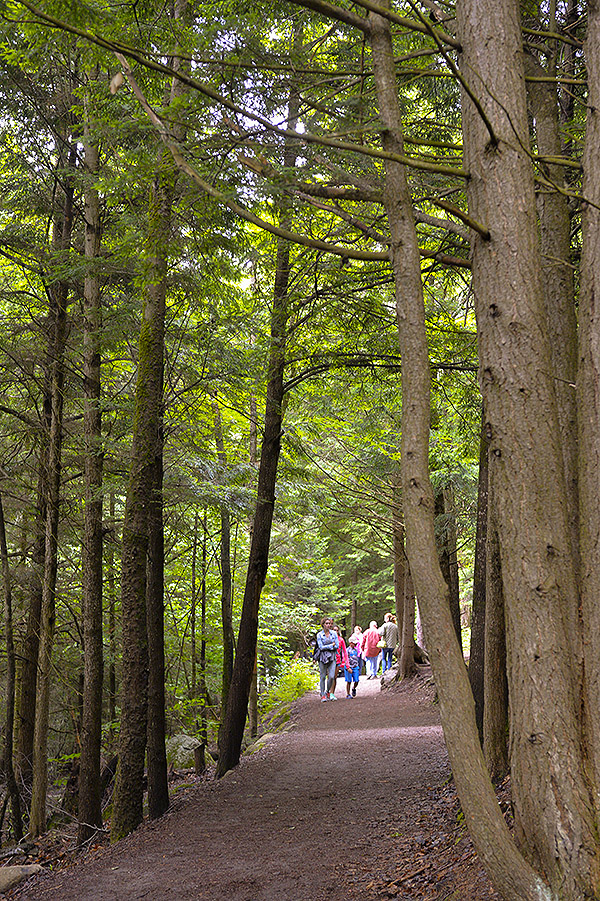 visitors walking on Wild Center trail