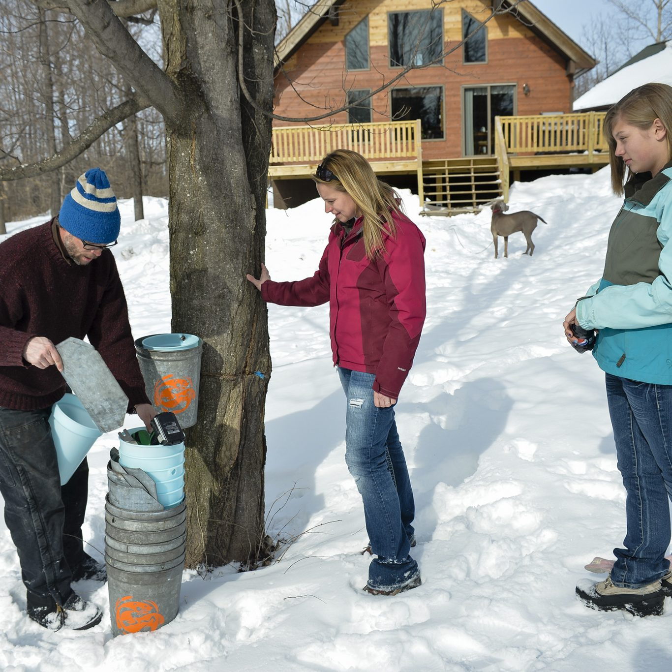 Collecting Sap from Tupper Tapper family