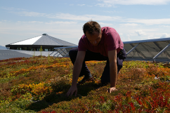 planting green roof
